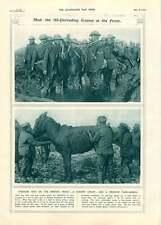1917 fronte Britannico combattimento FANGO salvato Animale da soma