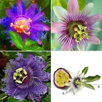 100x  Passion Flower Seeds Home Garden Rare Passiflora Fruit Plants Seeds Decor