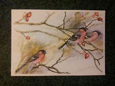 BOUVREUIL aquarelle VOZ  BULLFINCH watercolor bird  carte postale postcard