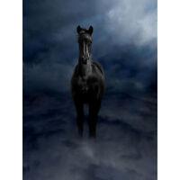 Pegasus Black Horse Clouds Ethereal Photo Art Canvas Print