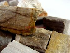 Natural Petrified Wood Pieces- 2000 Carat Lots - Rough Rock Real Fossils Nice