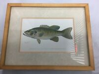 Original Antique Fish Print The Small Mouthed Black Bass by S. F. Denton Framed