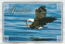 AK BALD EAGLE POSTCARD - GREAT STATE OF ALASKA - FISHING THE LAST FRONTIER