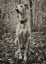 Lurcher greeting card notelet greyhound whippet birthday photo dog brindle woods