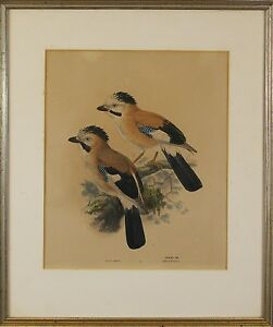 Henry E.Dresser Syrian Jay Original Etching Print
