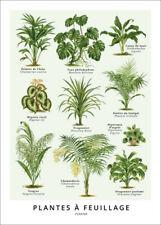 Premium-Poster Blattpflanzen (Französisch) - Wunderkammer Collection