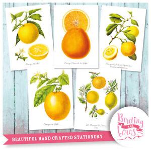 Citrus Fruit - Set of 5 A4 Botanical Prints - Lemon Orange Art Kitchen Decor