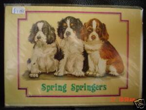 Lovely Springer Spaniel Blank Greeting Card