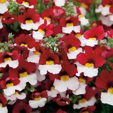 NEMESIA STRUMOSA RED WHITE  - 2000 SEEDS