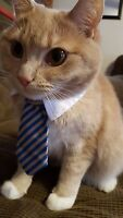 Dog Cat Animal Cute Striped Tie Collar Pet Adjustable Neck Tie Tuxedo US Ship