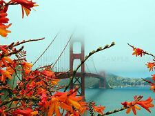GOLDEN GATE BRIDGE SAN FRANSISCO PHOTO ART PRINT POSTER PICTURE BMP613A