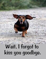 METAL FRIDGE MAGNET Dachshund Dog Wait Forgot To Kiss You Goodbye Humor