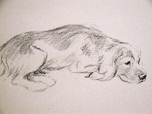 Lucy Dawson Beautiful FOX HOUND Taking a Rest 1946 Vintage Dog Print Matted