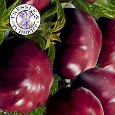 Tomate Raro Elefante Negro - 10 semillas-vendedor de Reino Unido