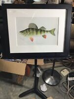 Vintage Fish Print The Yellow or Barred Perch by S. F. Denton Framed 18 x 14