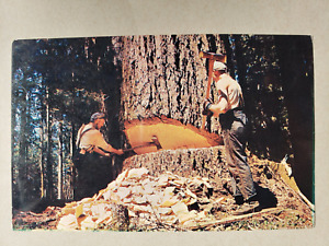 Vintage Postcard - Oregon Lumberjacks  - Smith-Western Co.