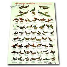 PHEASANTS OF THE WORLD POSTER EDUCATION WALL POSTERS MORE THAN 50 BREED SPECIES