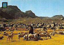 BT3162 beira alta pastor da Serra da Estrela sheep moutons      Portugal