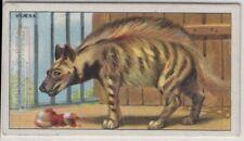 Striped Hyaena Hyaena striata 90+ Y/O Trade Ad Card