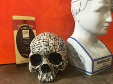 Real Human Skull Replica Resin & Marble Dust Phrenology Fowler Zane Wylie Cert.