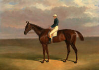 ZWPT563 portrait man ridding big horse in grassland oil painting art on canvas