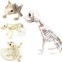 Halloween Skeleton Dog Mouse Cat Prop Bat Bones Party Shop Decor Horror Scary
