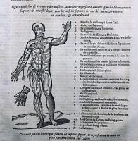 Rare 1614  Gravures Myologie Anatomie Ecorché Chirurgie Ambroise Paré Muscles