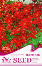 30 Seeds/Pack Red Creeping Sanvitalia Seed Sanvitalia Procumbens Flower A227