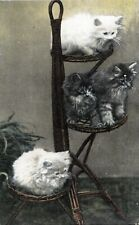 BI74.Vintage Postcard. Kittens sitting on a what not.