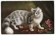 Cat Cat Katze