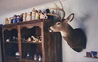 Vintage Photo Slide Of Deer Mount Living Room New York Eldridge Hunter