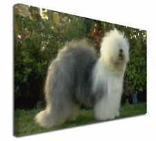More details for old english sheepdog x-large 30