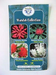 Waratah Collection