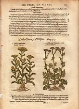 1597 Gerard Antique Herbal Historie of Plantes Handcolored Woodcuts Yarrow