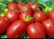 "Ukrainian Organic vegetable Tomato seeds ""De-Barao Red"" (Solanum lycopersicum)."