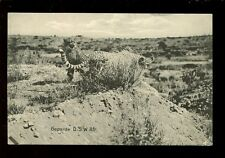 South Africa Germany Deutsch-Sudwest-Afrika Leopards c1900s? PPC