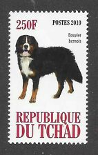 Photo Full Body Study Portrait Postage Stamp BERNESE MOUNTAIN DOG Chad 2010 MNH