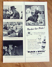 1952 Black White Scottish Scotty Terrier Westie Ad at the Beauty Shoppe