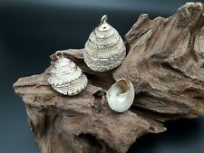 2 A 30 Pendentif Coquillages de Mer Métal Doré Nautilus (CAR-11) Clip Plaqué