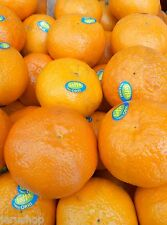 20 Fresh seeds Tangerine Clementine Citrus Jaffa Orri Tangerina  Israel  הדר