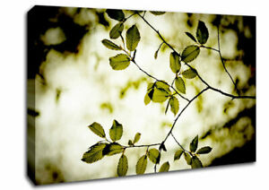 Twigs With Green Leaves Forest 05724 Canvas Print Wall Art