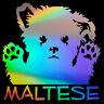 MALTESE Cute Funny Dog Sticker Car Window Door Bumper Laptop Vinyl Decal Decor