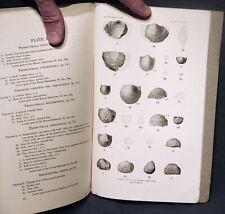 Usgs Mississippian Fossils Boone Limestone Arkansas Brachiopods, Trilobites 1915