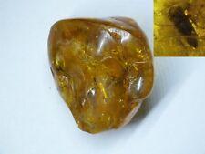 Bursztyn inkluzja , Amber  fossils,  39,9 gram (6186)