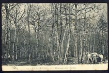 cpa Bourgogne (Nièvre) Métier En NIVERNAIS L'ABATTAGE des CHÊNES Bucherons Arbre