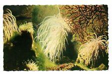 Monaco - cpsm - Aquarium marin - Anémone  (C4591)