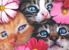 3 Kittens Birthday From All Card - Greeting Card by Avanti Press