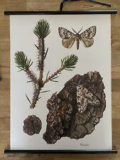Nonne  Falter Wald Insekten  Schulwandkarte 50 cm x 70 cm
