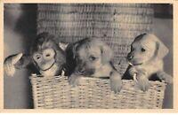 Animaux - n°69894 - Chiens avec un petit singe dans un panier en osier - PC Pari