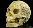 """5.0"""" CORAL FOSSIL Carved Crystal Skull, Realistic, Crystal Healing"""